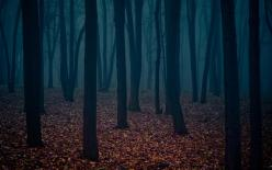 327328_tumblr_static_dark_forest_wallpaper_2-wide